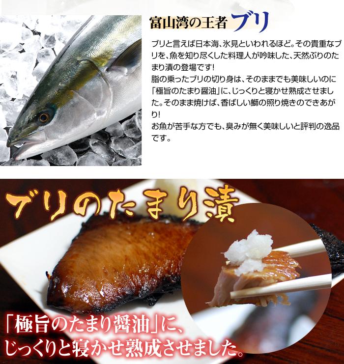 富山湾の王者ブリ