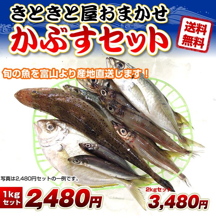 """産地直送!新湊で水揚げされた""""きときと""""な魚をお届け!"""