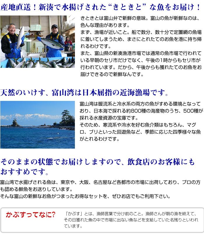 """産地直送!新湊で水揚げされた""""きときと""""な魚をお届け!きときとは富山弁で新鮮の意味。富山の魚が新鮮なのは、色んな理由があります。まず、漁場が近いこと。船で数分、数十分で定置網の魚場に着いてしまうため、まさにとれたてのお魚を港に持ち帰れるわけです。また、富山県の新湊漁港市場では通常の魚市場で行われている早朝のセリ市だけでなく、午後の1時からもセリ市が行われています。だから、午後からも獲れたてのお魚をお届けできるので新鮮なんです。"""
