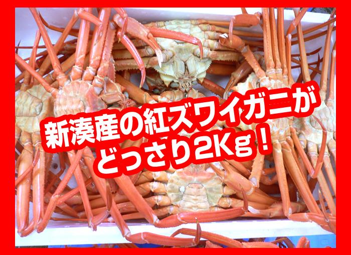 新湊産の紅ズワイガニがどっさり2Kg!
