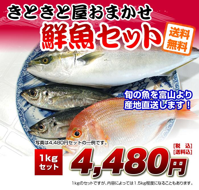 """産地直送!新湊で水揚げされた""""きときと""""な魚をお届け!おろした状態でお届けもOK!!さばくのが面倒な方にも安心!!"""