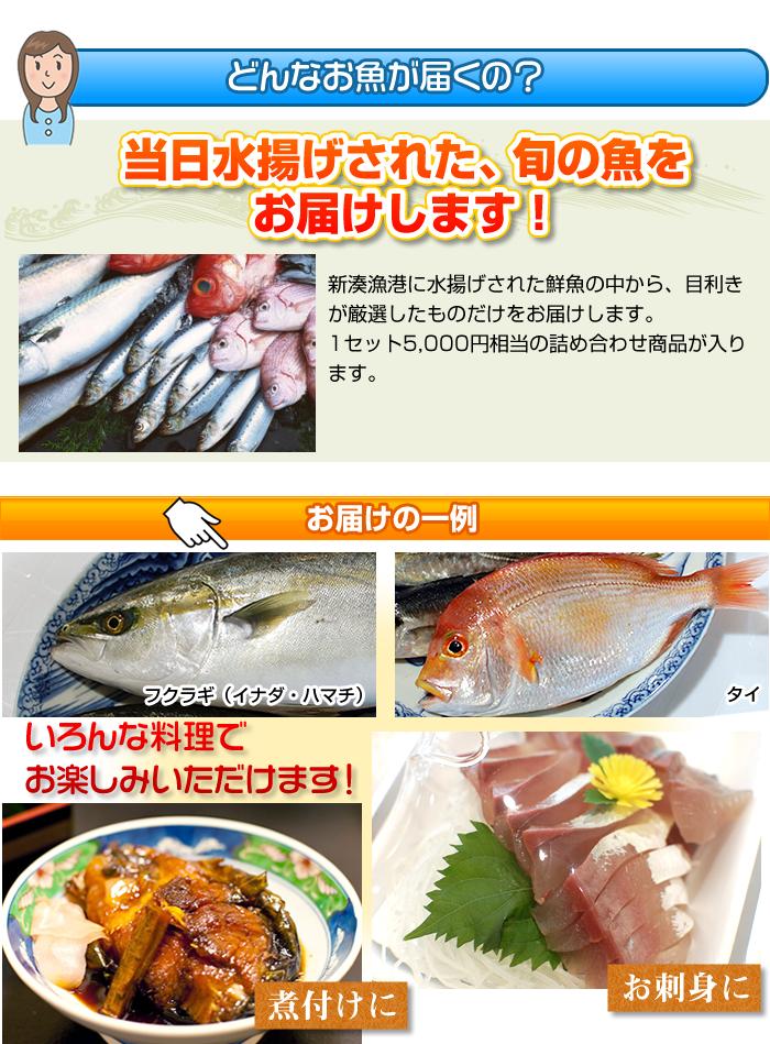 当日水揚げされた、旬の魚をお届けします!
