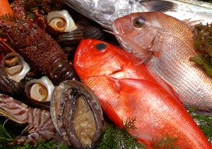 新湊鮮魚センター