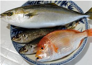 鮮魚販売:ショッピング